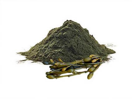 alga norveski kelp